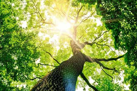 Tree-fr-Life Protecteurs de Couverture arri/ère de si/ège dauto universels pour Enfants Prot/éger larri/ère des Housses de si/ège Auto pour b/éb/é Contre la Boue